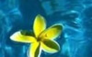 Виды и особенности стеллажей для выращивания рассады