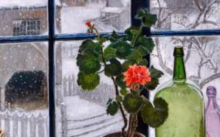 Уход за геранью (пеларгонией) зимой в домашних условиях