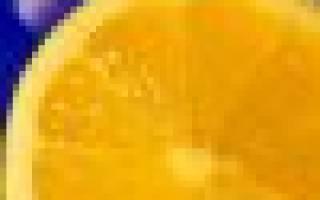 Однолетняя хризантема фото