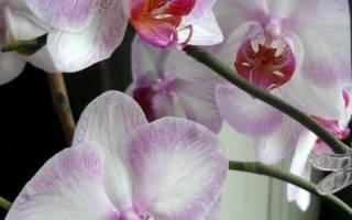 Необычные орхидеи фото
