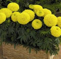 Цветы для балконов и лоджий фото