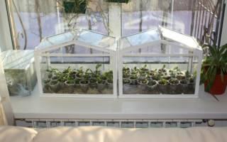 Парники на подоконнике и балконе